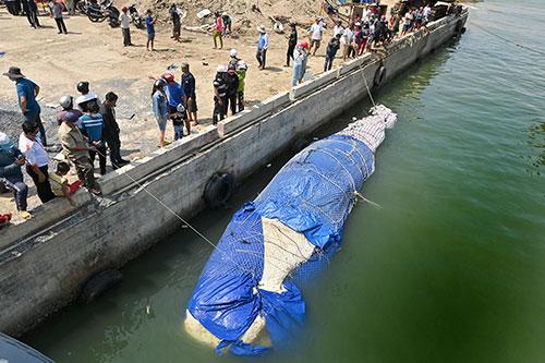 Một số hình ảnh đưa cá voi nặng hơn 4 tấn vào bờ - Ảnh 4.