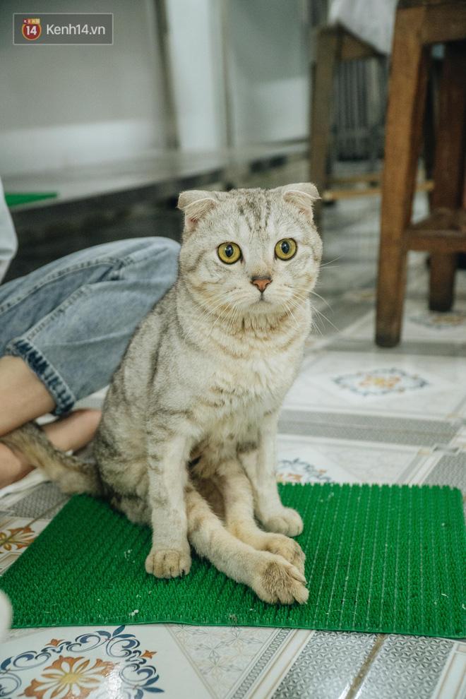Bên trong phòng khám chữa bệnh, châm cứu miễn phí cho chó mèo ở Hà Nội: Ngoan, bà thương... - Ảnh 33.