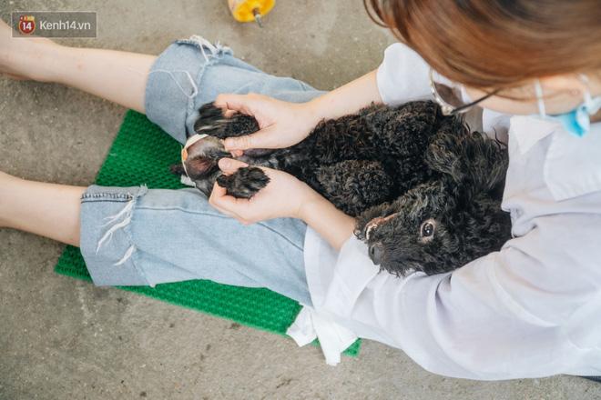 Bên trong phòng khám chữa bệnh, châm cứu miễn phí cho chó mèo ở Hà Nội: Ngoan, bà thương... - Ảnh 34.