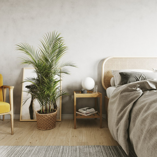 7 loại cây cảnh NÊN đặt trong phòng ngủ vừa tốt cho sức khỏe vừa hợp phong thủy - Ảnh 6.