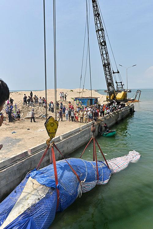 Một số hình ảnh đưa cá voi nặng hơn 4 tấn vào bờ - Ảnh 6.