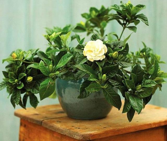 7 loại cây cảnh NÊN đặt trong phòng ngủ vừa tốt cho sức khỏe vừa hợp phong thủy - Ảnh 7.