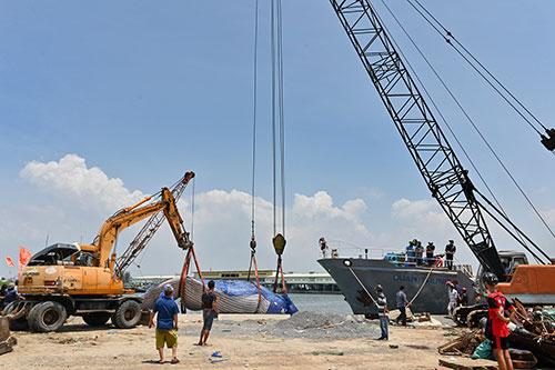 Một số hình ảnh đưa cá voi nặng hơn 4 tấn vào bờ - Ảnh 7.