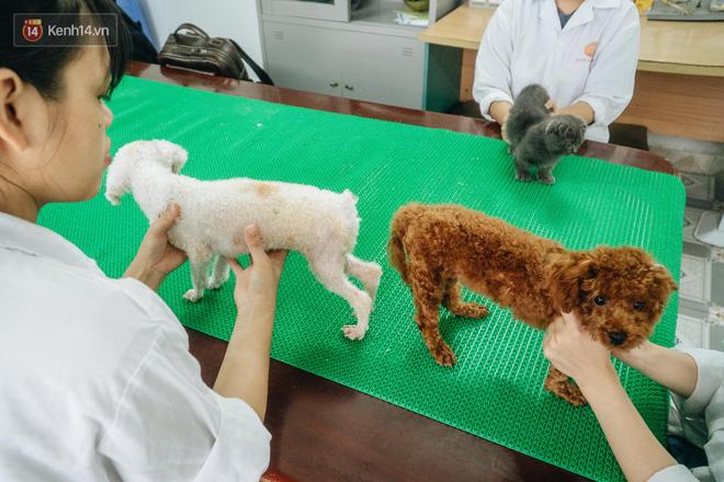 Bên trong phòng khám chữa bệnh, châm cứu miễn phí cho chó mèo ở Hà Nội: Ngoan, bà thương... - Ảnh 9.