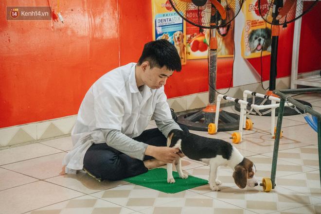 Bên trong phòng khám chữa bệnh, châm cứu miễn phí cho chó mèo ở Hà Nội: Ngoan, bà thương... - Ảnh 10.