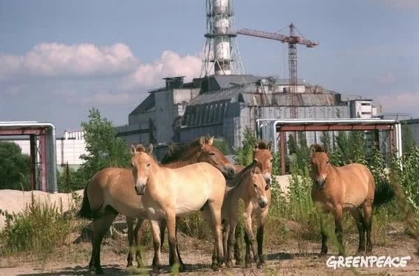 Thảm họa Chernobyl: Rừng xanh chuyển đỏ, quan tài bê tông khổng lồ và những điều có thể bạn chưa biết - Ảnh 5.