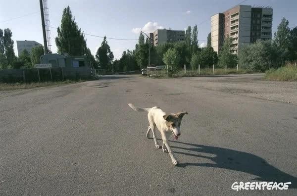 Thảm họa Chernobyl: Rừng xanh chuyển đỏ, quan tài bê tông khổng lồ và những điều có thể bạn chưa biết - Ảnh 6.