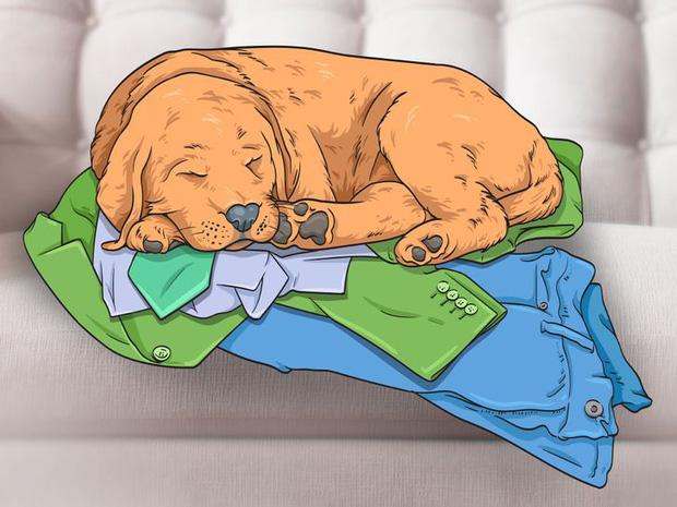 7 hành động kỳ quái của chú chó bạn nuôi và lý do đằng sau ai cũng cần biết - Ảnh 5.