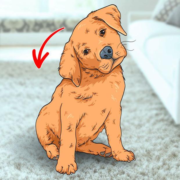 7 hành động kỳ quái của chú chó bạn nuôi và lý do đằng sau ai cũng cần biết - Ảnh 6.