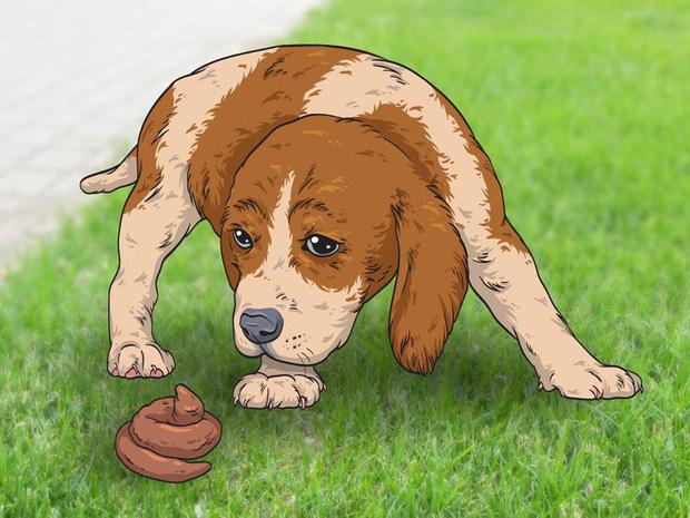 7 hành động kỳ quái của chú chó bạn nuôi và lý do đằng sau ai cũng cần biết - Ảnh 7.