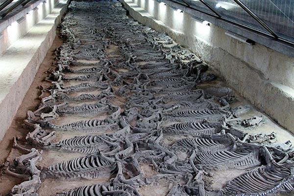 Hãi hùng cách hiến tế 600 chiến mã trong lăng mộ vua Trung Hoa - Ảnh 1.