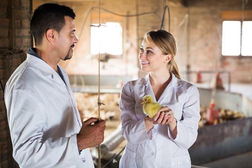 Nước Mỹ treo giải thưởng gấp 5 lần Nobel, cho ai nghĩ ra cách cứu sống 7 tỷ con gà trống mỗi năm - Ảnh 4.