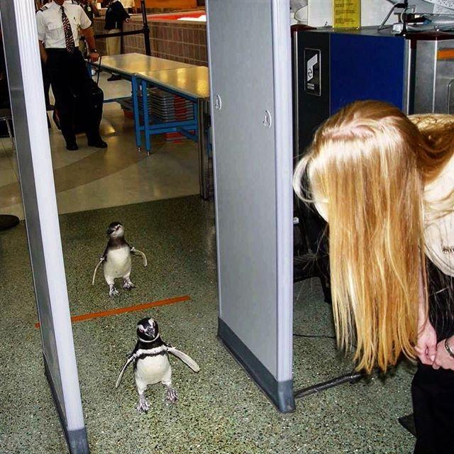 Loạt ảnh khó tin được chộp lại tại sân bay: Số 2 sẽ khiến nhiều người tưởng là 1 vụ án mạng (P2) - Ảnh 5.