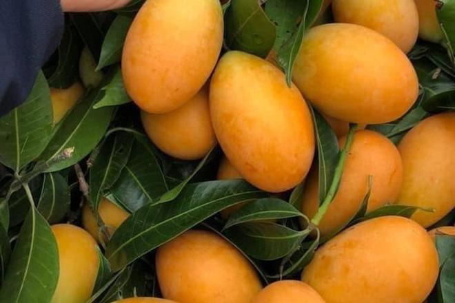 Cô gái khoe một loại cây mọc hoang sau vườn nhưng cho quả trĩu cả cành, dân thành thị nhìn vào còn lâu mới biết tên - Ảnh 8.
