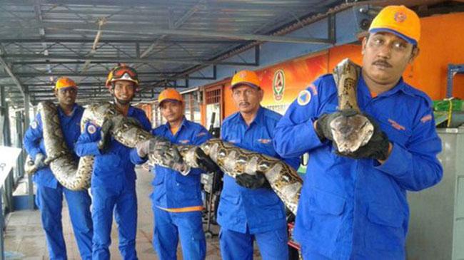 Những 'kỷ lục gia' đáng sợ trong thế giới loài rắn: Từ độc nhất tới dài nhất, cá thể nào cũng khiến con người phải rùng mình - Ảnh 1.