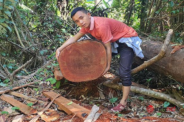 Huế: Rừng Tùng Ta Lăng chảy máu, nhiều cây khủng bị chặt hạ, cắt xẻ ngổn ngang - Ảnh 13.