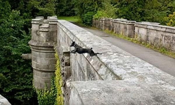 Giải mã cây cầu kỳ quái khiến hàng trăm con chó đi qua đều muốn tự tử - Ảnh 4.