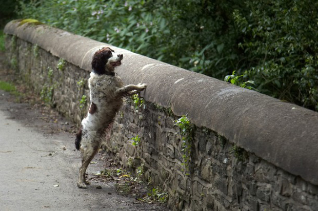 Giải mã cây cầu kỳ quái khiến hàng trăm con chó đi qua đều muốn tự tử - Ảnh 5.