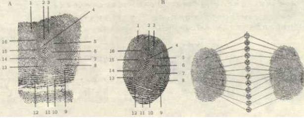 Thời chưa có công nghệ nhận dạng, người xưa dùng dấu điểm chỉ phá án như nào? 002