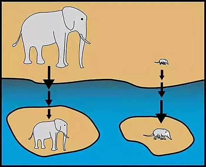 Tại sao những loài động vật trên các hòn đảo luôn kỳ dị hơn những người anh em trên đất liền? - ảnh 1