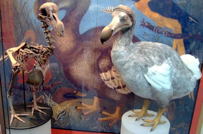 Tại sao những loài động vật trên các hòn đảo luôn kỳ dị hơn những người anh em trên đất liền? - ảnh 2