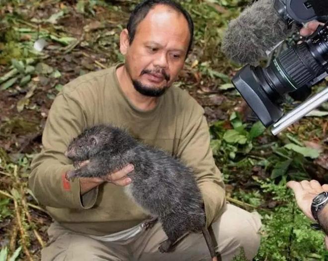 Tại sao những loài động vật trên các hòn đảo luôn kỳ dị hơn những người anh em trên đất liền? - ảnh 12