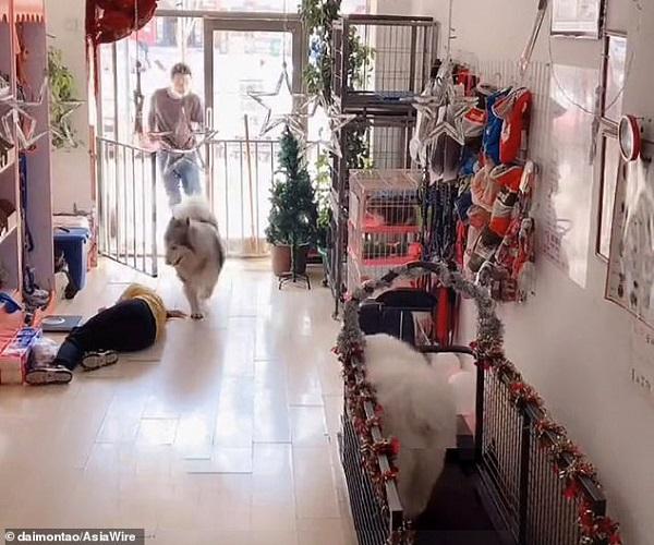Đang tập thể dục lại thấy người bị ngất, chú chó husky có phản ứng gây ngỡ ngàng - Ảnh 3.