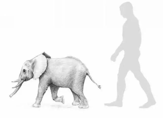 Tại sao những loài động vật trên các hòn đảo luôn kỳ dị hơn những người anh em trên đất liền? - ảnh 3