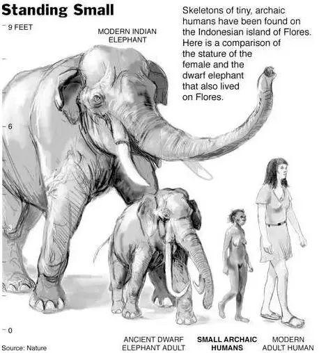 Tại sao những loài động vật trên các hòn đảo luôn kỳ dị hơn những người anh em trên đất liền? - ảnh 9