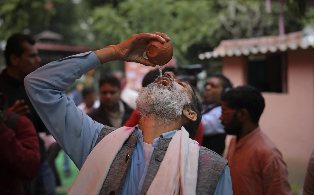 Ấn Độ: Bệnh nhân Covid-19 bị ép uống... nước tiểu bò để chữa bệnh