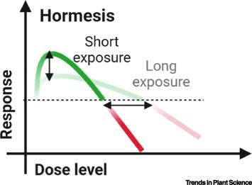 Nghiên cứu mới cho thấy nhiễm phóng xạ đôi khi có thể khiến bạn khỏe mạnh hơn - Ảnh 2.