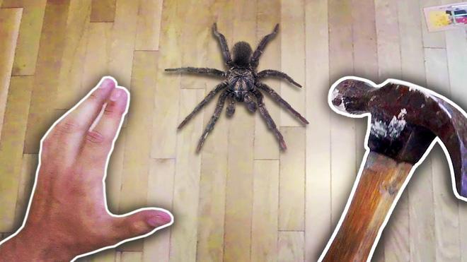 Cứ gặp nhện là đánh - Liệu chúng ta có nên giết những con nhện nhà hay không? - ảnh 1