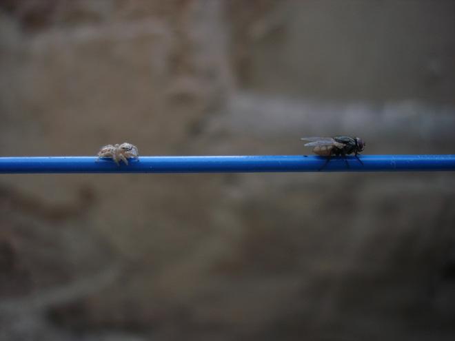 Cứ gặp nhện là đánh - Liệu chúng ta có nên giết những con nhện nhà hay không? - ảnh 2