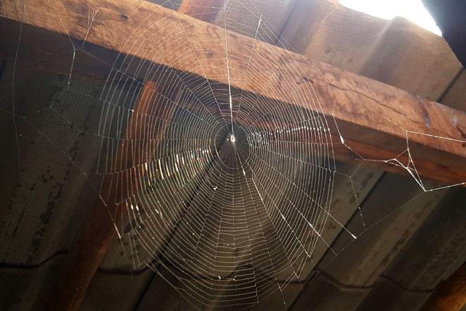 Cứ gặp nhện là đánh - Liệu chúng ta có nên giết những con nhện nhà hay không? - ảnh 3