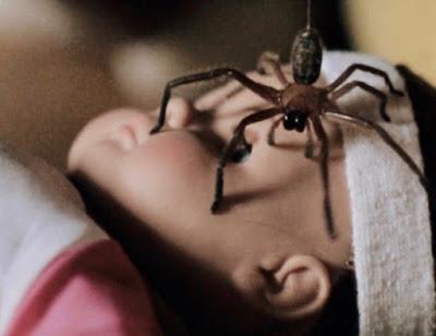 Cứ gặp nhện là đánh - Liệu chúng ta có nên giết những con nhện nhà hay không? - ảnh 4