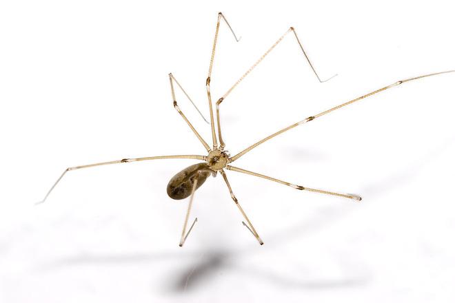 Cứ gặp nhện là đánh - Liệu chúng ta có nên giết những con nhện nhà hay không? - ảnh 6