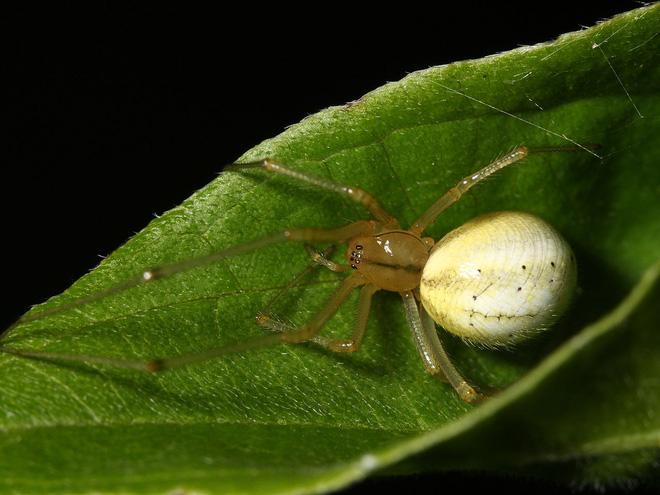 Cứ gặp nhện là đánh - Liệu chúng ta có nên giết những con nhện nhà hay không? - ảnh 7