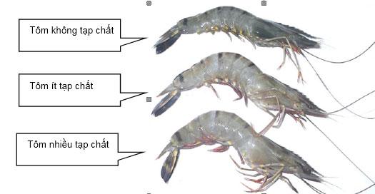 Chuyên gia Nguyễn Duy Thịnh: 10kg tôm có thể bị bơm tới 2kg tạp chất, cách để nhận biết tôm bẩn - Ảnh 9.