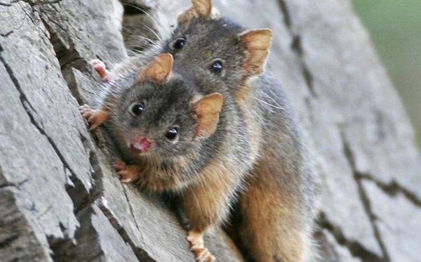 Loài vật có thời gian giao phối lâu nhất thế giới: Kéo dài tới 14 giờ, sẽ không dừng lại cho đến khi chết!
