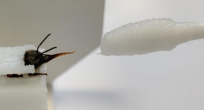 Ong có thể phát hiện người dương tính với COVID-19 chỉ trong vài giây, thậm chí cả khu vực có virus SARS-CoV-2 trong không khí - Ảnh 2.