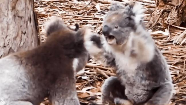 16 ví dụ cho thấy thiên nhiên Úc đáng sợ ra sao: Ai yếu tim chắc ngất khi gặp vị khách số 3 - Ảnh 2.