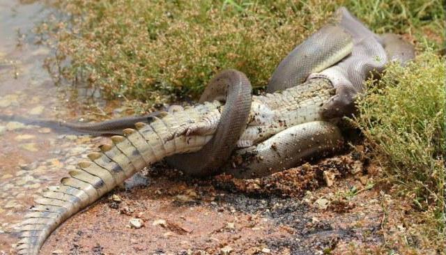 16 ví dụ cho thấy thiên nhiên Úc đáng sợ ra sao: Ai yếu tim chắc ngất khi gặp vị khách số 3 - Ảnh 9.