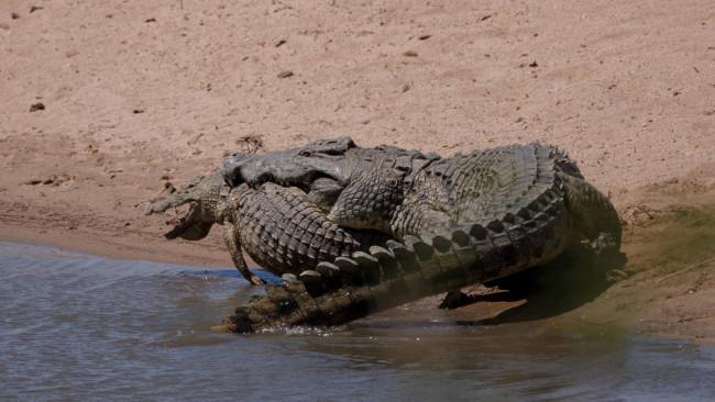 16 ví dụ cho thấy thiên nhiên Úc đáng sợ ra sao: Ai yếu tim chắc ngất khi gặp vị khách số 3 - Ảnh 6.