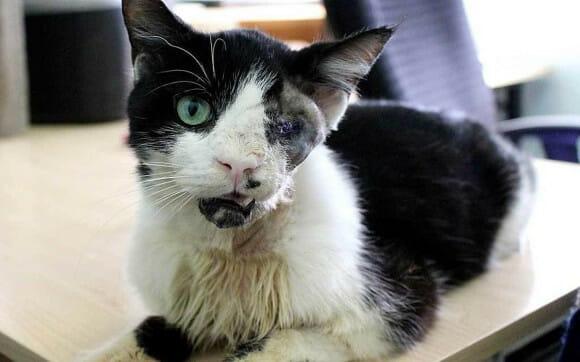Chôn chú mèo chết vì tai nạn, ít lâu sau chủ nhân sững sờ chứng kiến chuyện kỳ lạ xảy ra - Ảnh 2.