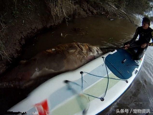 Đang lái thuyền trên sông bỗng nhìn thấy vật thể khổng lồ xuất hiện trên mặt nước, người đàn ông giật mình sợ hãi, hét lên thất thanh    - Ảnh 4.