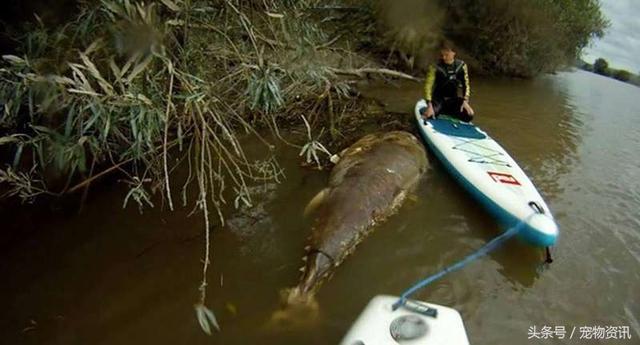 Đang lái thuyền trên sông bỗng nhìn thấy vật thể khổng lồ xuất hiện trên mặt nước, người đàn ông giật mình sợ hãi, hét lên thất thanh    - Ảnh 2.