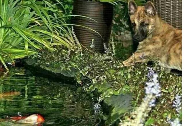 Thấy chó cưng thường xuyên trốn ra ngoài, sinh nghi nên quyết định theo dõi, chủ nhân choáng trước cảnh tượng trước mắt - Ảnh 2.