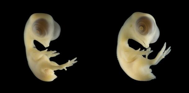 Bộ ảnh rõ từng chân tơ về các loài vật trong bào thai: Bạn có thể nhìn hình đoán xem đây là sinh vật gì? - Ảnh 22.