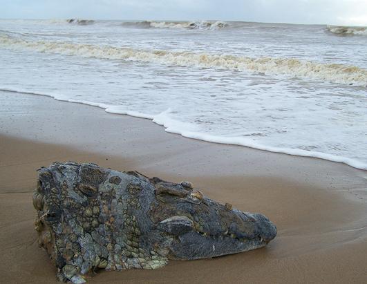 Những thứ đại dương mang trả lại con người: Kích thước thứ số 8 gây kinh ngạc tột độ - Ảnh 10.