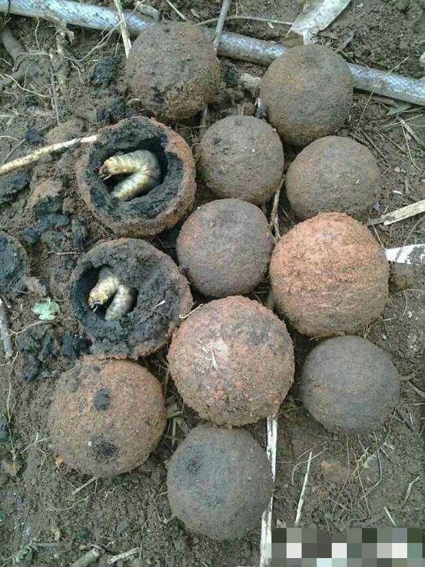 Người nông dân đào được quả cầu bí ẩn trong hang đất: Sau khi dùng xẻng đập vỡ nó, anh lập tức hoảng sợ - Ảnh 3.